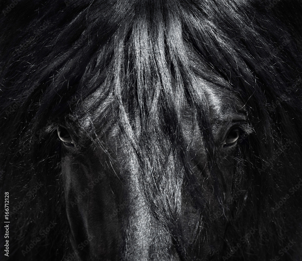 Fototapeta Portrait close up Spanish purebred horse with long mane. Black-and-White photo.