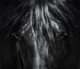 Portreta zamknięty Hiszpański purebred koń z długą grzywą. Czarno-białe zdjęcie. - 166712128