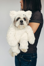 Shih Tzu Dog In Teddy Bear Costume