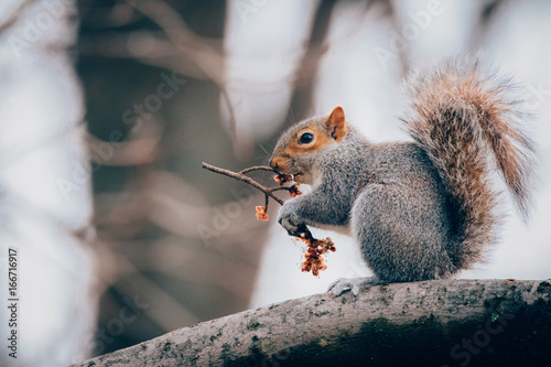 Side view of squirrel holding twig while sitting on branch