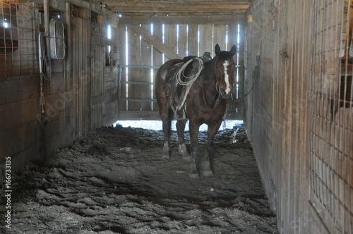Photo  Horse in Barn