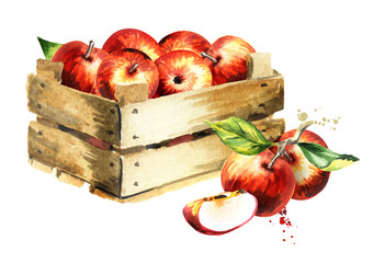 Box with apples. Watercolor Hand-drawn illustration