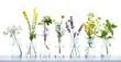 canvas print picture - Alternative Medicine  -  Various Herbs