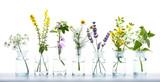 Fototapeta Kwiaty - Alternative Medicine  -  Various Herbs