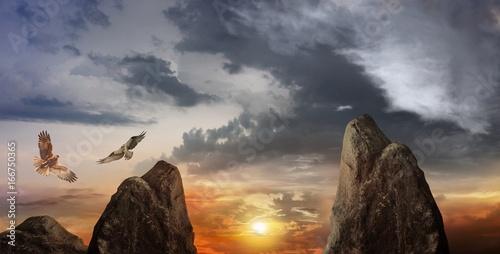 Poster Aigle Dramatic colorful sky . Light in dark sky . beautiful cloud . Wildlife scene . Couple of birds in clouds