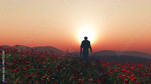 Fototapeta 3D soldier walking in a poppy field