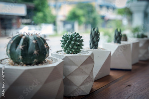 Papiers peints Cactus cactus in white pot on wood