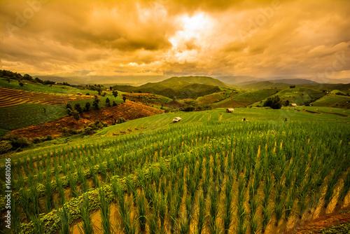 Papiers peints Vignoble Landscape of green rice fields, Located pabongpiang at maejam, Chiangmai, Thailand.