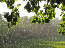 Sunshower Or Sun Shower, Meteorological Phenomenon: Rain Falls While The Sun Is Shining. Blind Rain, Rain And Sun At The Same Time. Sunshower Against The Background Of Green Branches Trees And Meadow
