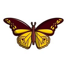 Cyane Butterfly Icon, Cartoon ...
