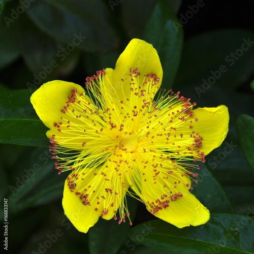 Obraz na plátně Fleur jaune