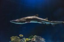Slender Shark With Ominous Lighting