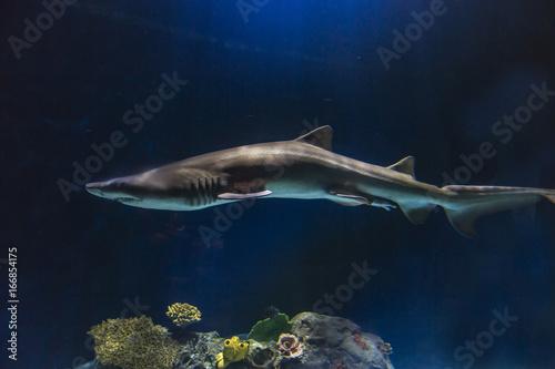 Obraz na dibondzie (fotoboard) Smukły rekin o złowieszczym oświetleniu