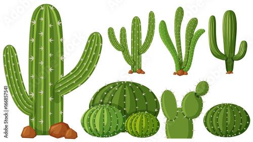 Slika na platnu Different types of cactus plants