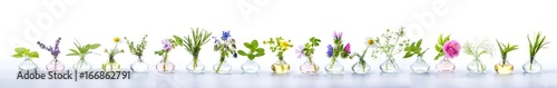 Keuken foto achterwand Panoramafoto s Herbs for alternative medicine, natural cosmetics and kitchen - Banner, Panorama - isolated on white background