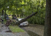 Tree Fallen On A Car After A S...