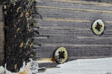 Two Screw Heads on Dirty Dark Painted Wood Surface. Macro Snapshot