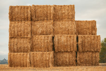 Bal Of Hay In The Field