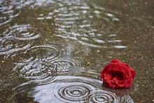 Eine Rote Rosenblüte Liegt Im Wasser Und Es Regnet