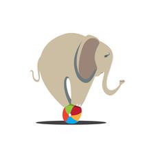 Elephant Balancing On Ball. Ci...