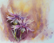 Nature Background With Delicate Conflowers.Picture Created With Watercolors.