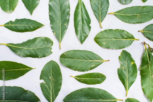 Valokuva  Laurel leaves on white