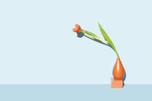 Orange Lily Flower Against Blu...
