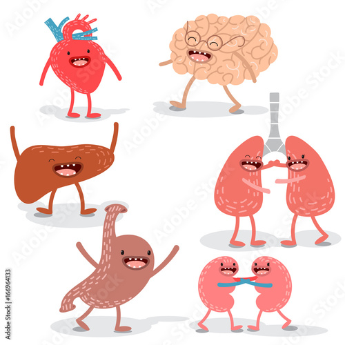 Vector Cartoon Human Anatomy Set Of Healthy Liver Heart Brain