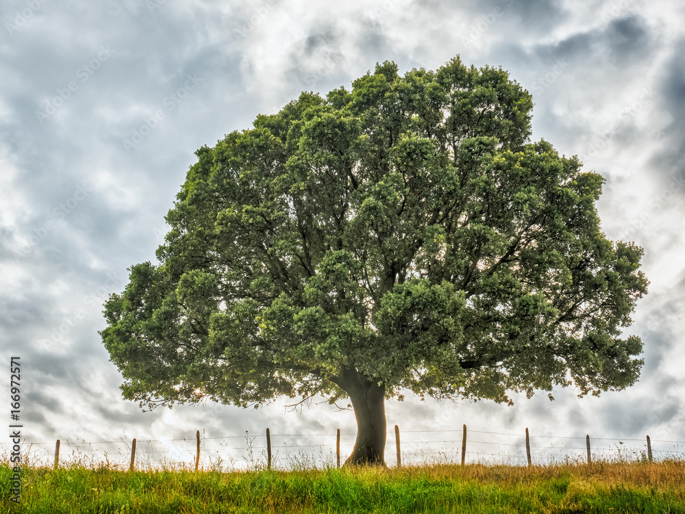 Nature background with tree and grass