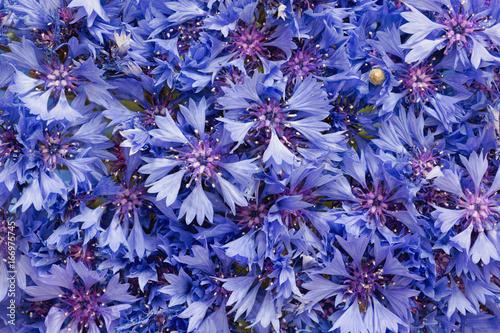 piekny-bukiet-cornflowers