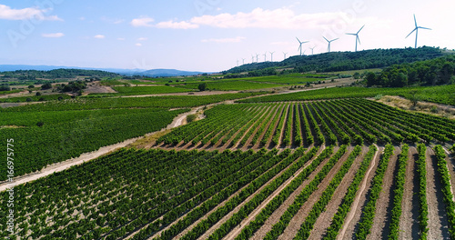 Papiers peints Vignoble paysage de vignes avec éolienne en fond