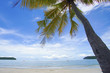 Caribbean sea and coconut palm with dramatic blue sky, parasailing.