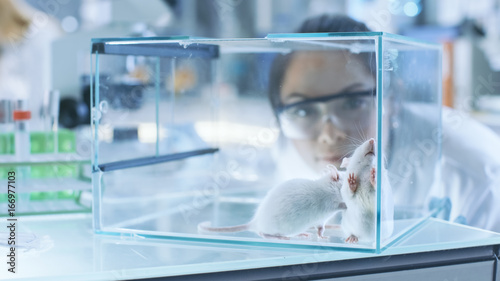 Fotografie, Obraz  Medical Research Scientists Examines Laboratory Mice kept in a Glass Cage