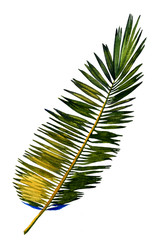 Plakat Hand painted watercolor palm leaf. Stylized jungle foliage, isolated on white background.