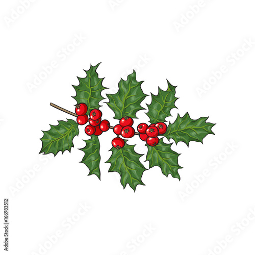 Mistletoe Branch Twig With Green Leaves And Red Berries Christmas