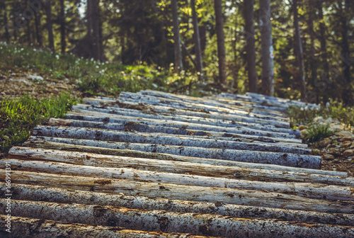 Mountain bike trail made of arranged tree trunks in the