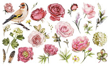 Set Watercolor Elements Of Flower Rose, Peonies, Hydrangea, Collection Garden And Wild Flowers, Leaves, Branches, Illustration Isolated On White Background, Bird - Goldfinch, Pink  Bud