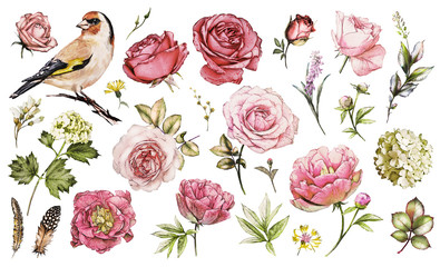 Fototapeta Róże Set watercolor elements of flower rose, peonies, hydrangea, collection garden and wild flowers, leaves, branches, illustration isolated on white background, bird - goldfinch, pink bud