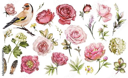 Obraz na plátně  Set watercolor elements of flower rose, peonies, hydrangea, collection garden an