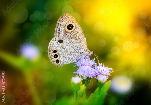 Foto auf Gartenposter Schmetterlinge im Grunge Small Butterfly on flower, vintage color style