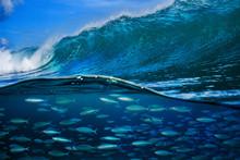 Tropical Fish Under Ocean Wave...
