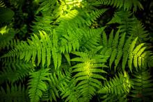 Green Fern Leaf Texture. Leaf ...