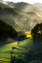 Top View Of Rice Terraced Fiel...