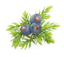 Juniper Berries Isolated