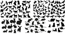 Vector, Isolated Silhouette Of Rat, Cats And Rabbits, Dog And Doves Collection
