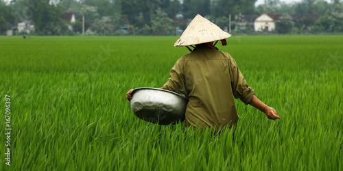 Garden Poster Rice fields Rice field worker