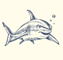 Hand Drawn Shark