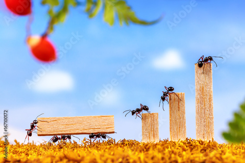Fotografía  Ants carrying wood for business graph, teamwork concept