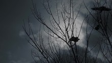Scary Crows In Gloomy Forest. One Raven Perching In Bare Tree Branches Screaming To Raise An Alarm And Crow Birds Flying Off Against Dramatic Cloudy Sky.