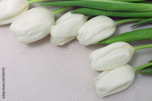 white-tulips-on-a-light-background